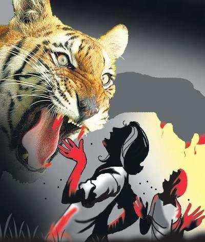 बर्दियामा बाघको आक्रमणबाट एक महिलाको ज्यान गयो