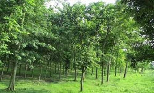 निजी वनमा किसानको आकर्षण